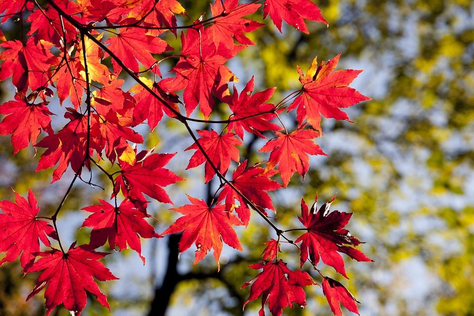 Les joies de l'automne